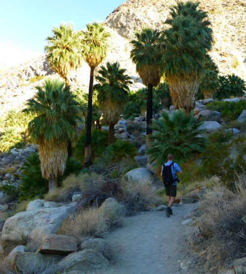Descending to the 49 Palms Oasis