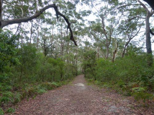 booderee_munyunga_trail11
