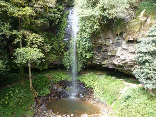 dorrigo_national_park4