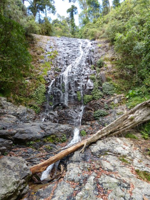 dorrigo_national_park5