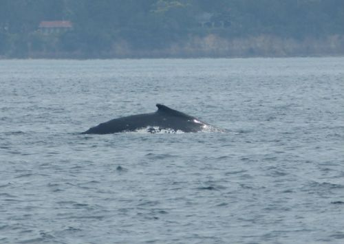 whale_watching_jervis_bay2