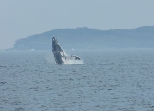 whale_watching_jervis_bay6