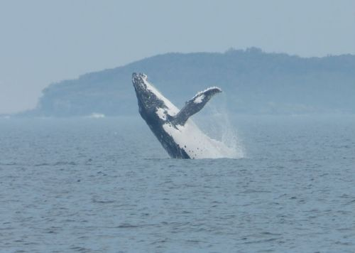 whale_watching_jervis_bay7
