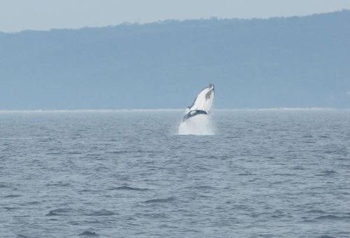 whale_watching_jervis_bay8