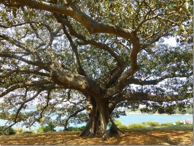 sydney_botanic_gardens1.jpg