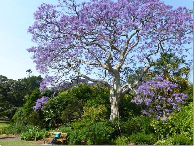 sydney_botanic_gardens2.jpg