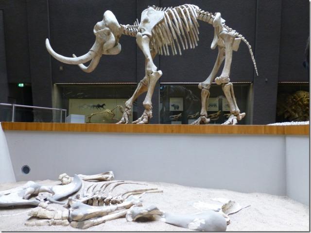 museum_am_loewentor6.jpg