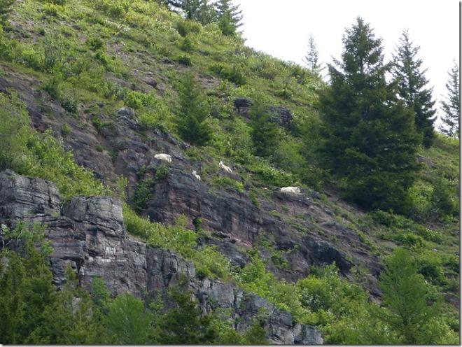 glacier_goat_lick_overview2.jpg
