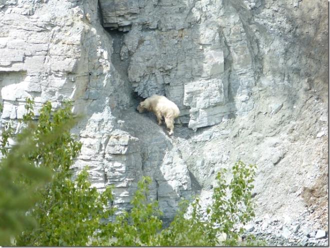 glacier_goat_lick_overview.jpg