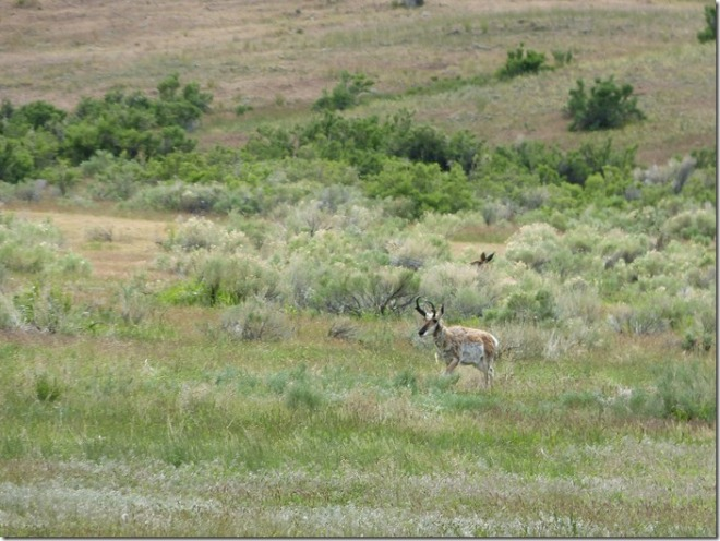 yellowstone_deer1.jpg