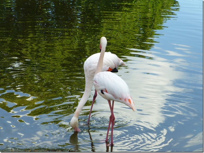 killesberg_flamingo.jpg