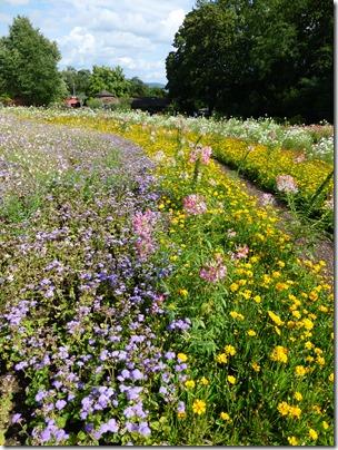 Killesberg_flowers2.jpg