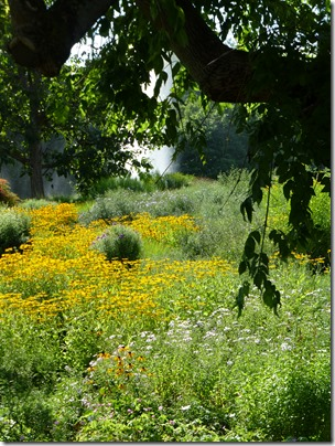 Killesberg_flowers4.jpg