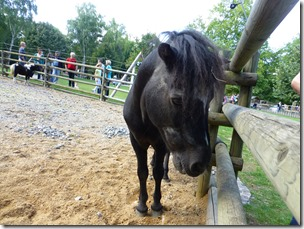 killesberg_horse1.jpg