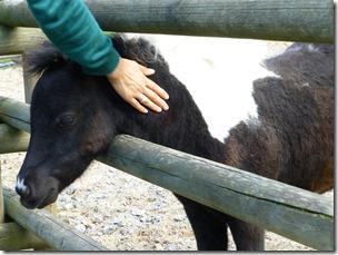 killesberg_pony1.jpg