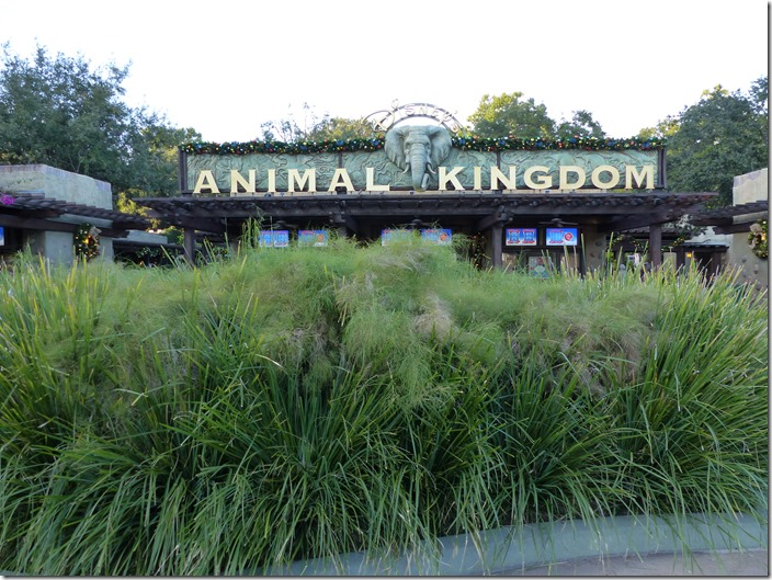 disneys_animal_kingdom.jpg