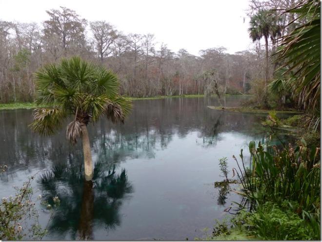 sliver_springs_swamp_trail3.jpg
