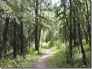 wrangel st elias aspen trail 1
