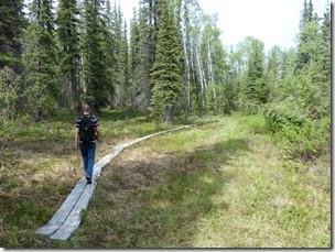 wrangel st elias aspen trail 2