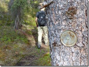 wrangel st elias tolsona trail 1