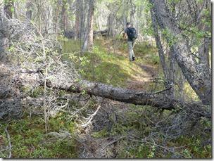wrangel st elias tolsona trail 2