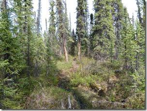wrangel st elias tolsona trail 4